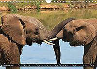 Asiatische und afrikanische Elefanten (Wandkalender 2019 DIN A4 quer) - Produktdetailbild 12