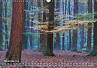 Astrein! - Der Baumkalender 2019 (Wandkalender 2019 DIN A3 quer) - Produktdetailbild 11