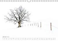 Astrein! - Der Baumkalender 2019 (Wandkalender 2019 DIN A4 quer) - Produktdetailbild 1