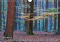 Astrein! - Der Baumkalender 2019 (Wandkalender 2019 DIN A4 quer) - Produktdetailbild 11