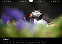 ATLANTIC PUFFINS OF SCOTLAND (Wall Calendar 2019 DIN A4 Landscape) - Produktdetailbild 6