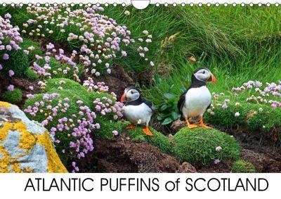 ATLANTIC PUFFINS OF SCOTLAND (Wall Calendar 2019 DIN A4 Landscape), Lister Cumming