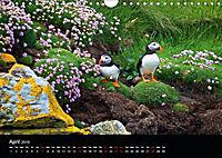 ATLANTIC PUFFINS OF SCOTLAND (Wall Calendar 2019 DIN A4 Landscape) - Produktdetailbild 4