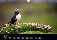 ATLANTIC PUFFINS OF SCOTLAND (Wall Calendar 2019 DIN A4 Landscape) - Produktdetailbild 8