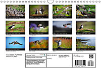 ATLANTIC PUFFINS OF SCOTLAND (Wall Calendar 2019 DIN A4 Landscape) - Produktdetailbild 13