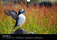 ATLANTIC PUFFINS OF SCOTLAND (Wall Calendar 2019 DIN A4 Landscape) - Produktdetailbild 11