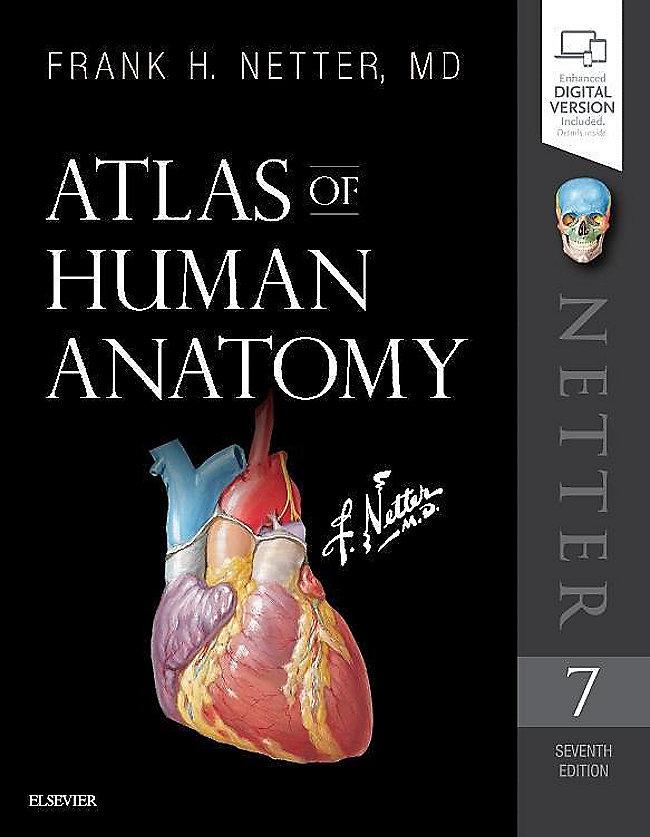 Atlas Of Human Anatomy Buch Portofrei Bei Weltbild Bestellen