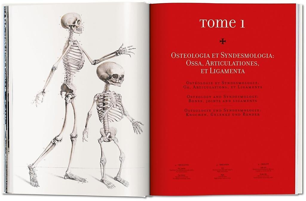 Atlas Of Human Anatomy And Surgery Atlas D Anatomie Humaine Et De