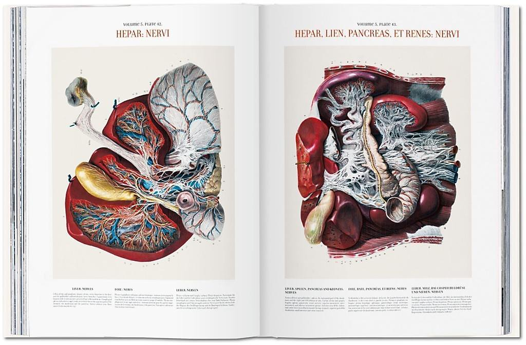 Atlas Of Human Anatomy And Surgery Atlas D Anatomie Humaine Et De