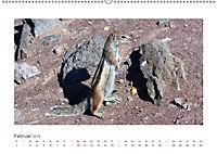 Atlashörnchen. Possierliche Nager auf Fuerteventura (Wandkalender 2019 DIN A2 quer) - Produktdetailbild 2