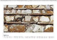 Atlashörnchen. Possierliche Nager auf Fuerteventura (Wandkalender 2019 DIN A2 quer) - Produktdetailbild 4