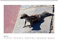 Atlashörnchen. Possierliche Nager auf Fuerteventura (Wandkalender 2019 DIN A2 quer) - Produktdetailbild 7