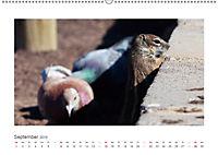 Atlashörnchen. Possierliche Nager auf Fuerteventura (Wandkalender 2019 DIN A2 quer) - Produktdetailbild 9
