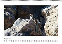 Atlashörnchen. Possierliche Nager auf Fuerteventura (Wandkalender 2019 DIN A2 quer) - Produktdetailbild 8