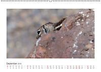 Atlashörnchen. Possierliche Nager auf Fuerteventura (Wandkalender 2019 DIN A2 quer) - Produktdetailbild 12
