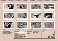 Atlashörnchen. Possierliche Nager auf Fuerteventura (Wandkalender 2019 DIN A2 quer) - Produktdetailbild 13