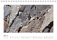 Atlashörnchen. Possierliche Nager auf Fuerteventura (Tischkalender 2019 DIN A5 quer) - Produktdetailbild 5