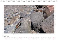 Atlashörnchen. Possierliche Nager auf Fuerteventura (Tischkalender 2019 DIN A5 quer) - Produktdetailbild 6