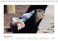 Atlashörnchen. Possierliche Nager auf Fuerteventura (Tischkalender 2019 DIN A5 quer) - Produktdetailbild 9