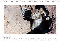 Atlashörnchen. Possierliche Nager auf Fuerteventura (Tischkalender 2019 DIN A5 quer) - Produktdetailbild 1