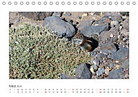 Atlashörnchen. Possierliche Nager auf Fuerteventura (Tischkalender 2019 DIN A5 quer) - Produktdetailbild 3