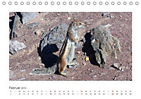 Atlashörnchen. Possierliche Nager auf Fuerteventura (Tischkalender 2019 DIN A5 quer) - Produktdetailbild 2