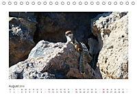 Atlashörnchen. Possierliche Nager auf Fuerteventura (Tischkalender 2019 DIN A5 quer) - Produktdetailbild 8