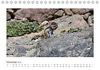Atlashörnchen. Possierliche Nager auf Fuerteventura (Tischkalender 2019 DIN A5 quer) - Produktdetailbild 11