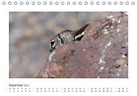 Atlashörnchen. Possierliche Nager auf Fuerteventura (Tischkalender 2019 DIN A5 quer) - Produktdetailbild 12