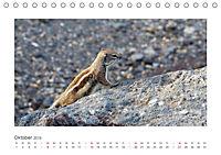 Atlashörnchen. Possierliche Nager auf Fuerteventura (Tischkalender 2019 DIN A5 quer) - Produktdetailbild 10