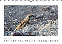 Atlashörnchen. Possierliche Nager auf Fuerteventura (Wandkalender 2019 DIN A3 quer) - Produktdetailbild 10