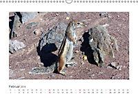 Atlashörnchen. Possierliche Nager auf Fuerteventura (Wandkalender 2019 DIN A3 quer) - Produktdetailbild 2