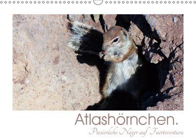 Atlashörnchen. Possierliche Nager auf Fuerteventura (Wandkalender 2019 DIN A3 quer), Lucy M. Laube
