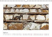 Atlashörnchen. Possierliche Nager auf Fuerteventura (Wandkalender 2019 DIN A4 quer) - Produktdetailbild 4