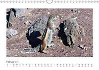 Atlashörnchen. Possierliche Nager auf Fuerteventura (Wandkalender 2019 DIN A4 quer) - Produktdetailbild 2