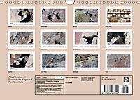 Atlashörnchen. Possierliche Nager auf Fuerteventura (Wandkalender 2019 DIN A4 quer) - Produktdetailbild 13