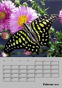Attraktive, Schmetterlinge (Wandkalender 2019 DIN A2 hoch) - Produktdetailbild 2