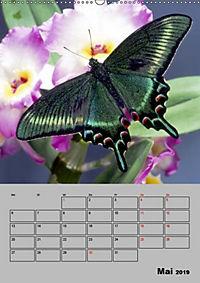 Attraktive, Schmetterlinge (Wandkalender 2019 DIN A2 hoch) - Produktdetailbild 5