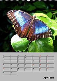 Attraktive, Schmetterlinge (Wandkalender 2019 DIN A2 hoch) - Produktdetailbild 4
