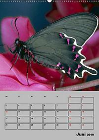 Attraktive, Schmetterlinge (Wandkalender 2019 DIN A2 hoch) - Produktdetailbild 6