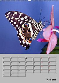 Attraktive, Schmetterlinge (Wandkalender 2019 DIN A2 hoch) - Produktdetailbild 7