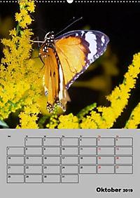 Attraktive, Schmetterlinge (Wandkalender 2019 DIN A2 hoch) - Produktdetailbild 10