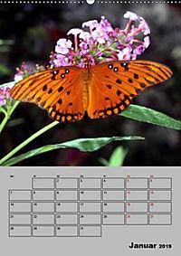 Attraktive, Schmetterlinge (Wandkalender 2019 DIN A2 hoch) - Produktdetailbild 1