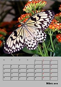 Attraktive, Schmetterlinge (Wandkalender 2019 DIN A2 hoch) - Produktdetailbild 3