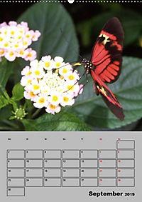 Attraktive, Schmetterlinge (Wandkalender 2019 DIN A2 hoch) - Produktdetailbild 9