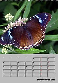 Attraktive, Schmetterlinge (Wandkalender 2019 DIN A2 hoch) - Produktdetailbild 11