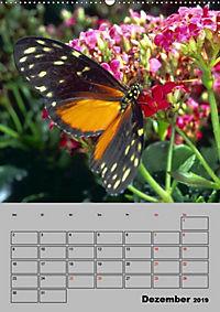 Attraktive, Schmetterlinge (Wandkalender 2019 DIN A2 hoch) - Produktdetailbild 12
