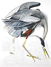 Audubon's Birds of America - Produktdetailbild 1