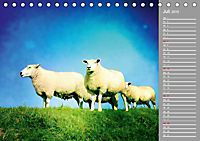 AUF DEM DEICH (Tischkalender 2019 DIN A5 quer) - Produktdetailbild 7