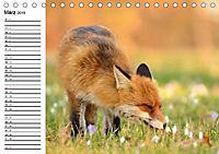 Auf den Spuren der Stadtfüchse (Tischkalender 2019 DIN A5 quer) - Produktdetailbild 3